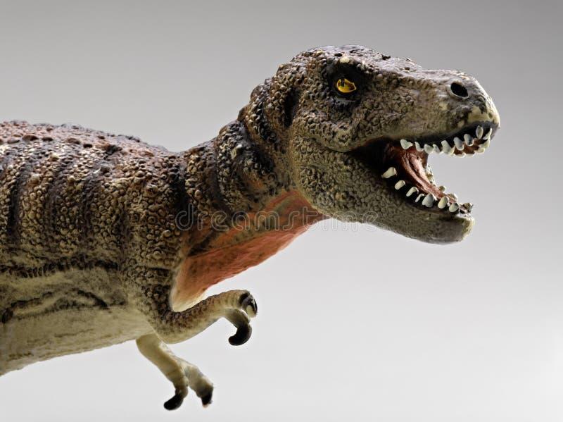 τυραννόσαυροι στοκ εικόνες με δικαίωμα ελεύθερης χρήσης