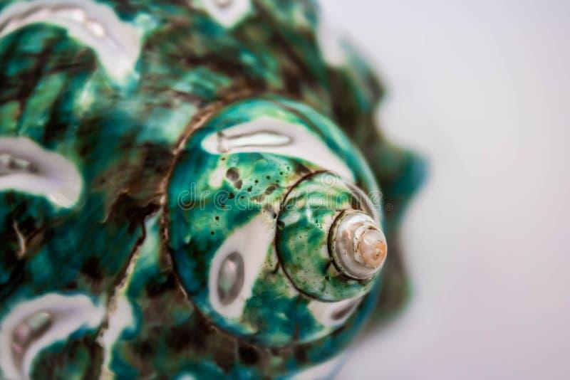 Τυρκουάζ θαλασσινό κοχύλι στοκ εικόνα με δικαίωμα ελεύθερης χρήσης
