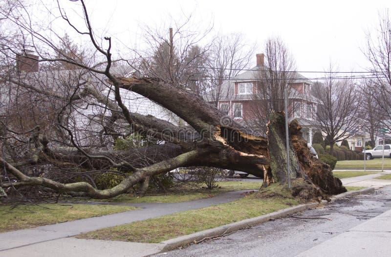 τυφώνας ζημίας στοκ φωτογραφία