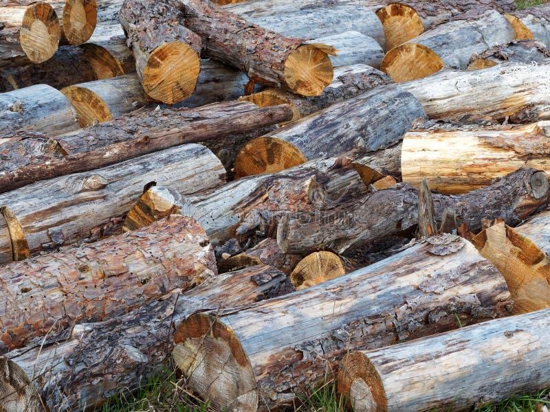 Τυχαία συσσωρευμένος σωρός των ξύλινων κούτσουρων στοκ εικόνα
