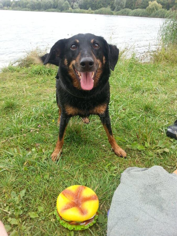 Τυχερό σκυλί στη λίμνη στοκ εικόνες