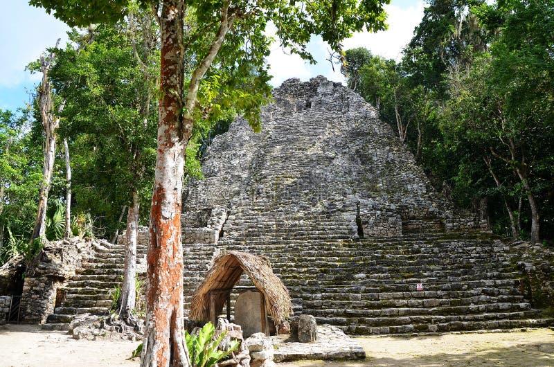Των Μάγια pyramide σε Coba, Μεξικό στοκ φωτογραφίες με δικαίωμα ελεύθερης χρήσης