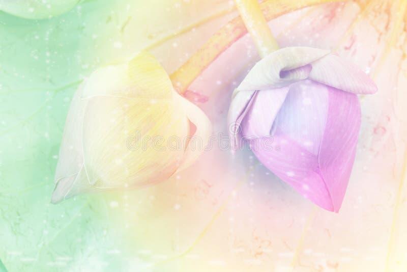 Τόνος κρητιδογραφιών του ρόδινου λουλουδιού λωτού στοκ φωτογραφία με δικαίωμα ελεύθερης χρήσης