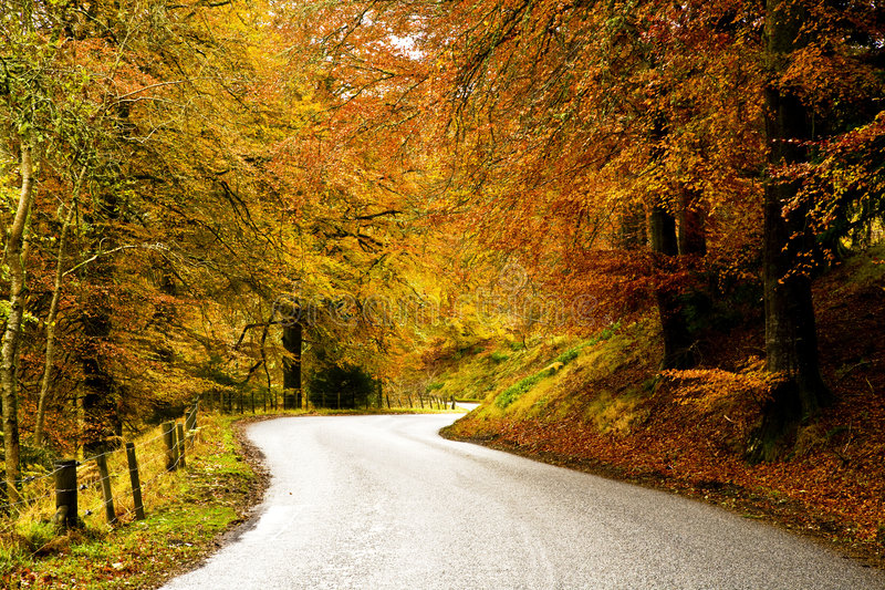 τύλιγμα δασικών δρόμων χωρών φθινοπώρου στοκ εικόνα