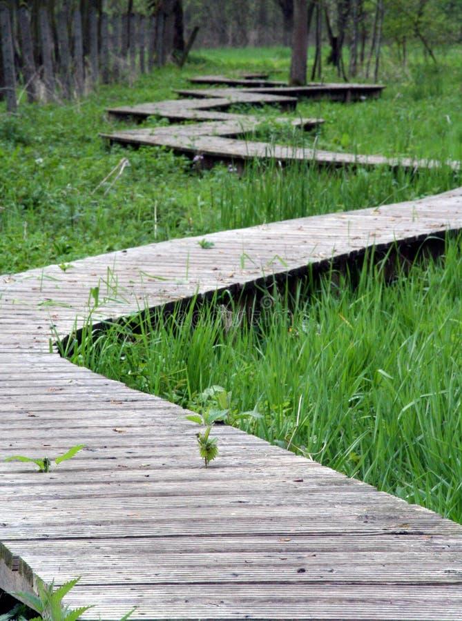 Download τύλιγμα μονοπατιών στοκ εικόνα. εικόνα από δάσος, έλος - 106855