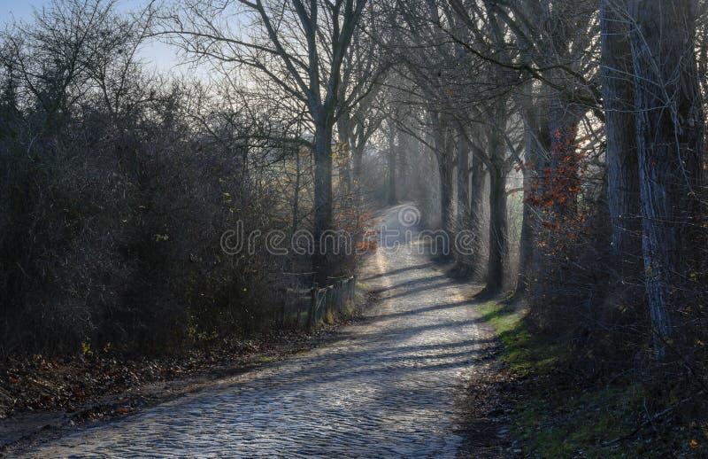 Τύλιγμα του αγροτικού δρόμου με το πεζοδρόμιο κυβόλινθων και των παλαιών δέντρων στο θόριο στοκ εικόνα