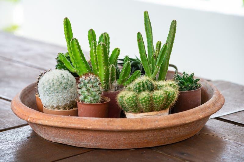 Τύποι διαφοράς εγκαταστάσεων κάκτων στα δοχεία αργίλου Κλειστός επάνω cactuss στοκ φωτογραφία