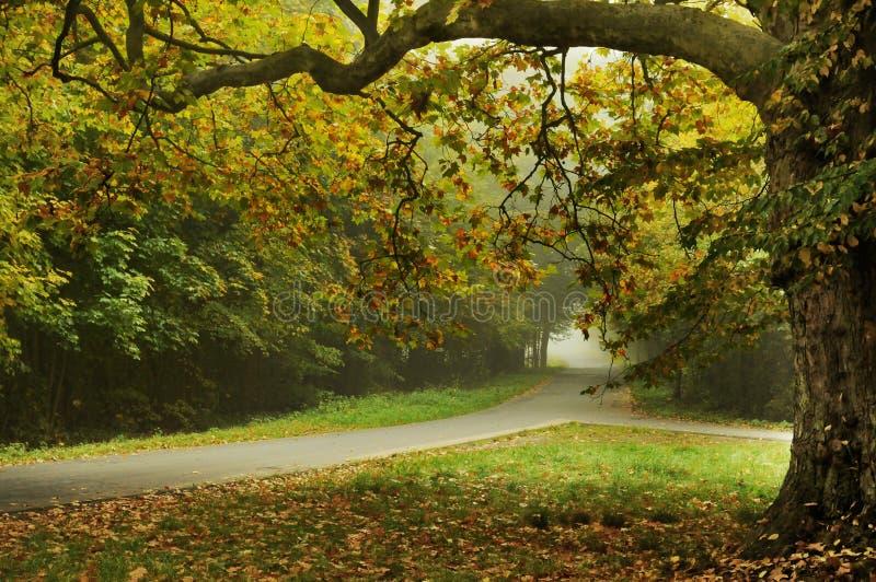 τύπος τοπίων φθινοπώρου στοκ φωτογραφία με δικαίωμα ελεύθερης χρήσης