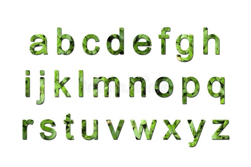 τύπος χαρακτήρων eco πράσινος διανυσματική απεικόνιση