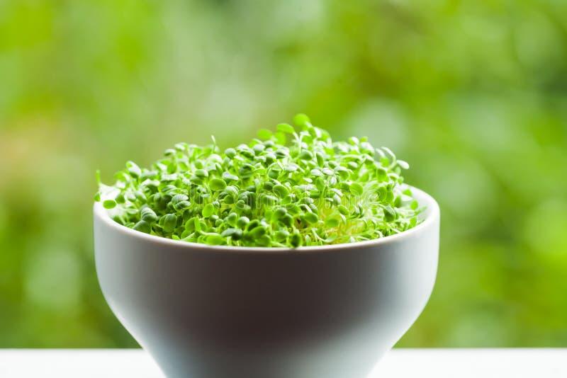 Υγιής έννοια τροφίμων, οργανικά πράσινα μικροϋπολογιστών σε ένα κύπελλο στοκ εικόνες