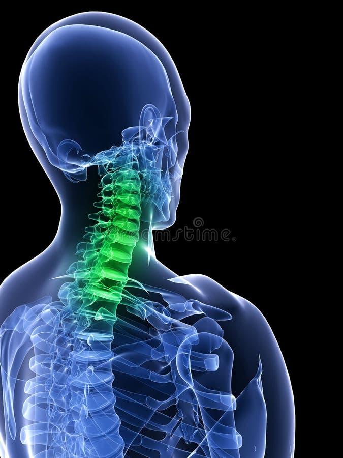 υγιής λαιμός διανυσματική απεικόνιση