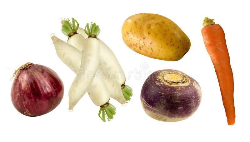 Υγιή λαχανικά ρίζας στοκ εικόνες με δικαίωμα ελεύθερης χρήσης