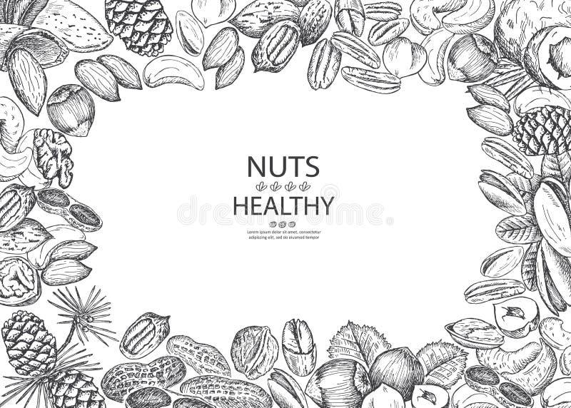 Υγιή οργανικά καρύδια Διανυσματικό πλαίσιο απεικόνισης Εκλεκτής ποιότητας σχέδιο απεικόνιση αποθεμάτων