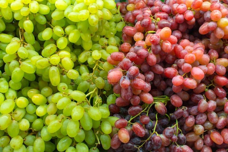 Υγιή σταφύλια κόκκινου κρασιού φρούτων στοκ εικόνα