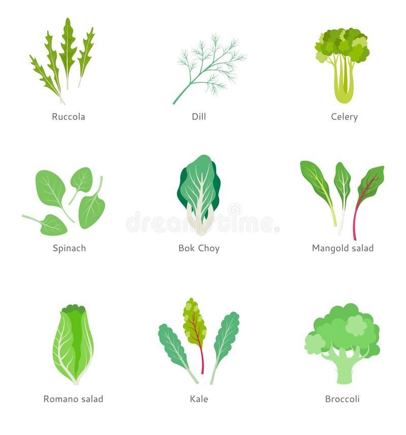 Υγιή συστατικά για τη φυτική σαλάτα ελεύθερη απεικόνιση δικαιώματος
