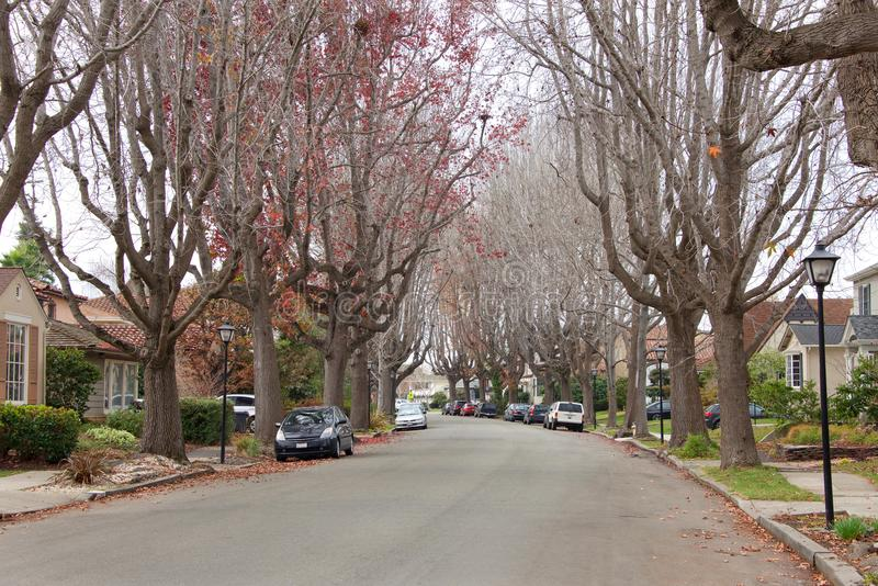 Υγρά ηλέκτρινα δέντρα στην προαστιακή γειτονιά, άγονη των φύλλων το χειμώνα στοκ φωτογραφία
