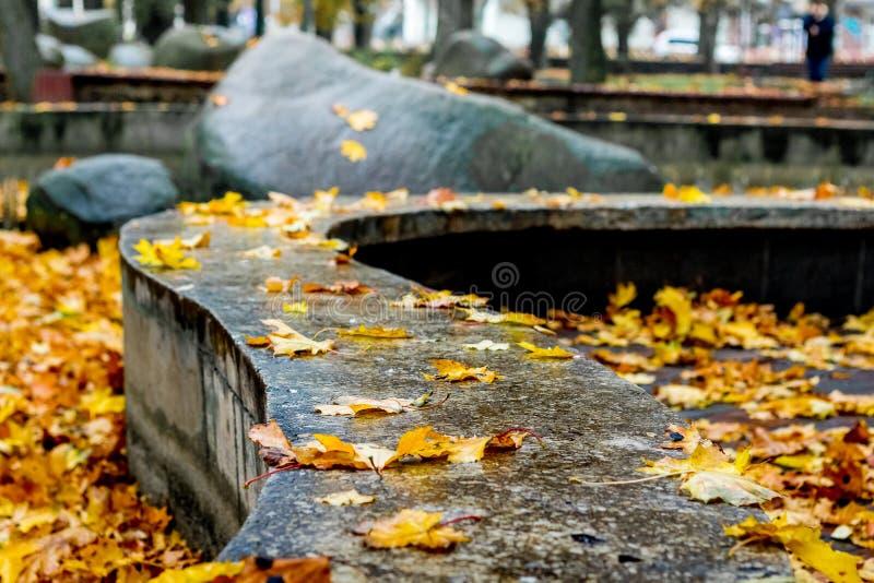 Υγρά κίτρινα φύλλα φθινοπώρου στο έδαφος στο πάρκο πόλεων κατά τη διάρκεια του τ στοκ εικόνες