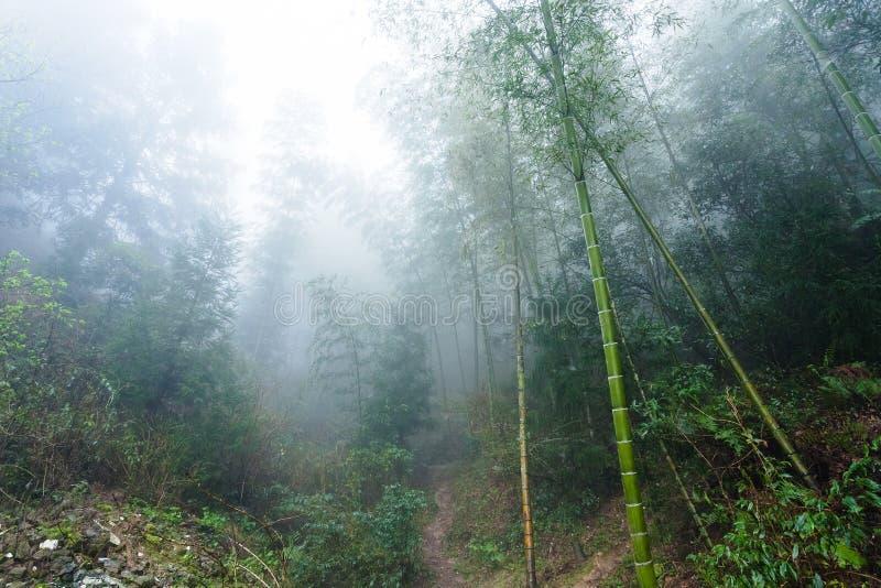 υγρές εγκαταστάσεις στο τροπικό δάσος υδρονέφωσης στην περιοχή Dazhai στοκ εικόνες