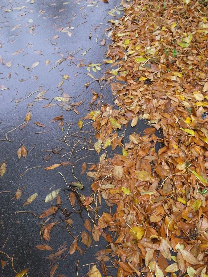 Υγρή γκρίζα άσφαλτος, και φύλλα φθινοπώρου στοκ φωτογραφίες