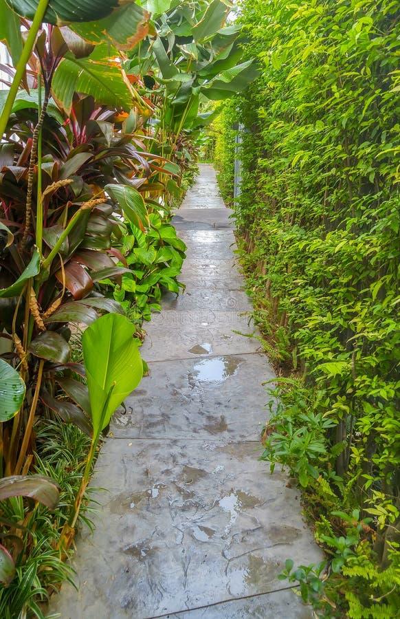 Υγρή πέτρινη διάβαση μετά από τη βροχή μέσω του διάφορου τύπου δέντρων στοκ φωτογραφία