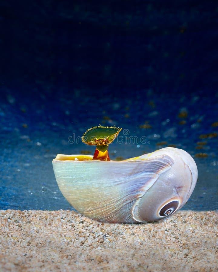 Υγρή τέχνη πτώσης - μορφή πτώσης νερού στοκ εικόνα με δικαίωμα ελεύθερης χρήσης