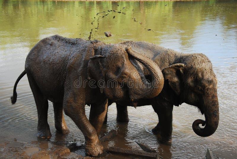Υγρός ρύπος ελεφάντων στοκ εικόνες με δικαίωμα ελεύθερης χρήσης