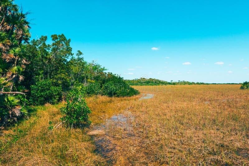 Υγρότοποι στο εθνικό πάρκο ΗΠΑ Everglades στοκ εικόνες με δικαίωμα ελεύθερης χρήσης