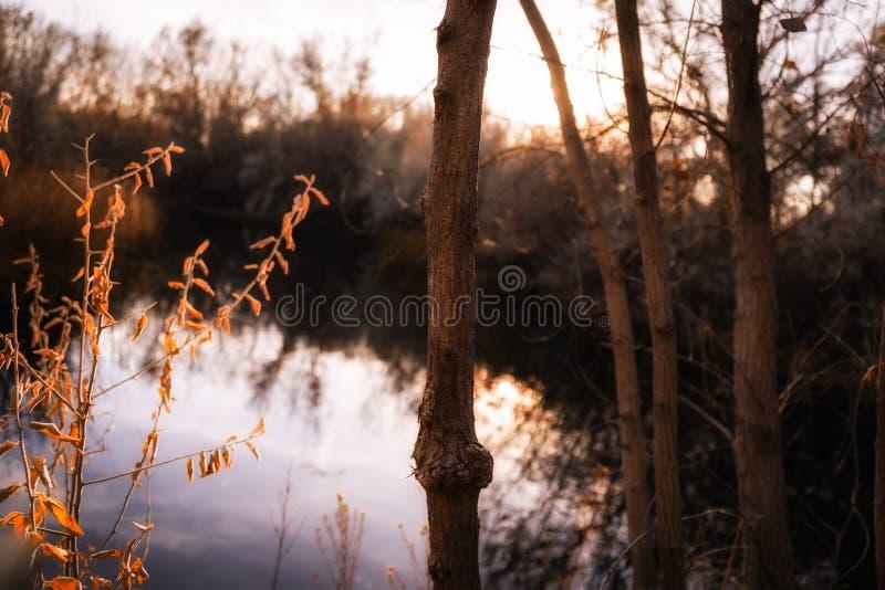Υγρότοποι όχθεων ποταμού στο ηλιοβασίλεμα στις τέσσερις γωνίες στοκ φωτογραφίες με δικαίωμα ελεύθερης χρήσης
