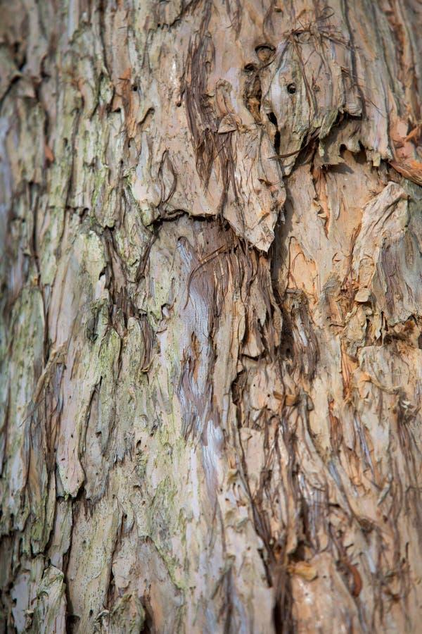 Υγρότοπος δέντρων Melaleuca σε Rayong Thailland στοκ φωτογραφίες