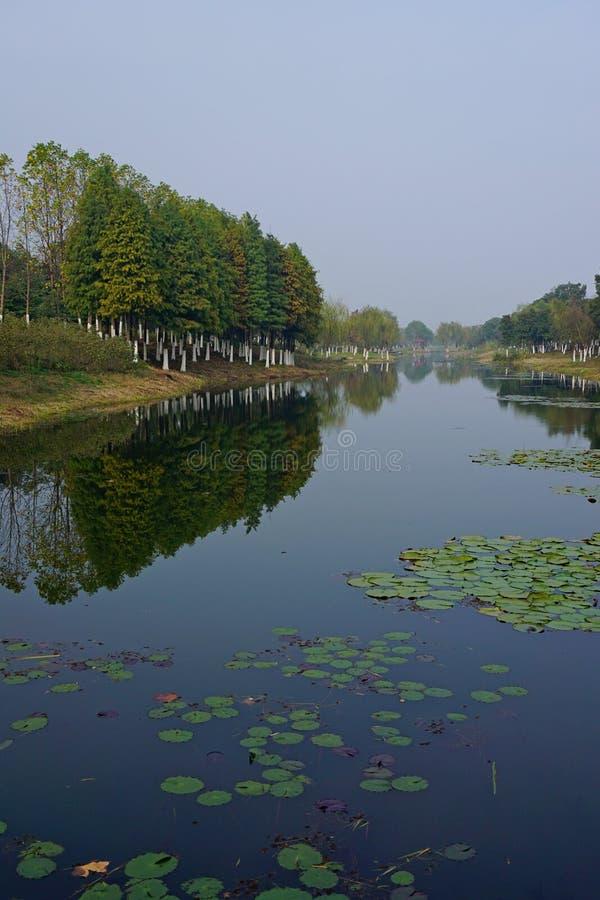 Υγρότοπος από τη λίμνη Taihu στοκ εικόνες