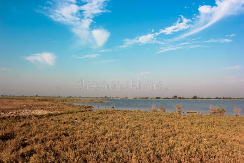 Υγρότοπος λιμνών Nalsarovar φύσης τοπίων στοκ φωτογραφίες με δικαίωμα ελεύθερης χρήσης