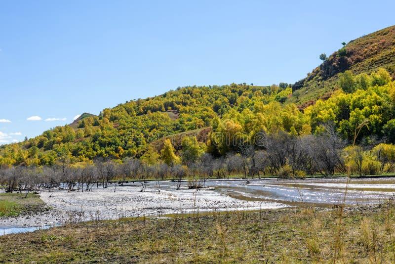υγρότοπος και άσπρη σημύδα το φθινόπωρο στοκ φωτογραφίες με δικαίωμα ελεύθερης χρήσης