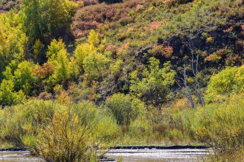 υγρότοπος και άσπρη σημύδα το φθινόπωρο στοκ εικόνα με δικαίωμα ελεύθερης χρήσης