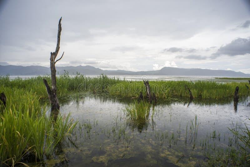 Υγρότοπος στη λίμνη Erhai, Δάλι, Κίνα στοκ φωτογραφία με δικαίωμα ελεύθερης χρήσης