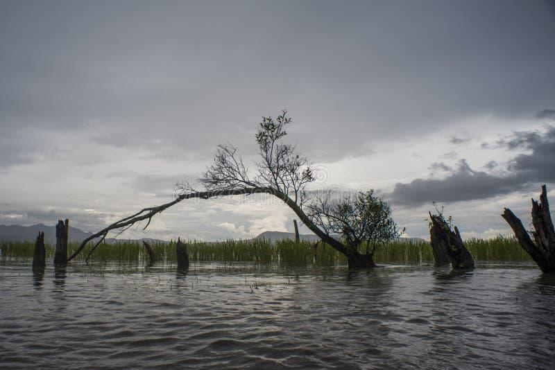 Υγρότοπος στη λίμνη Erhai, Δάλι, Κίνα στοκ εικόνες με δικαίωμα ελεύθερης χρήσης