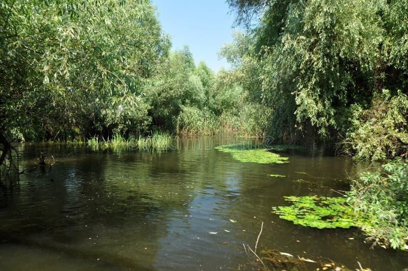 Υγρότοπος στο δέλτα Δούναβη στοκ εικόνα