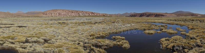 Υγρότοπος στο εθνικό πάρκο Lauca, Χιλή στοκ εικόνες