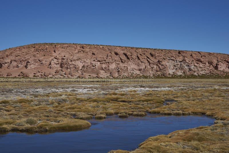 Υγρότοπος στο εθνικό πάρκο Lauca, Χιλή στοκ φωτογραφία με δικαίωμα ελεύθερης χρήσης