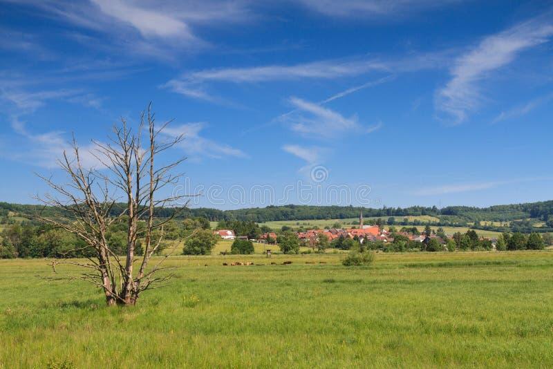 Υγρότοπος στο Wetterau στοκ εικόνα