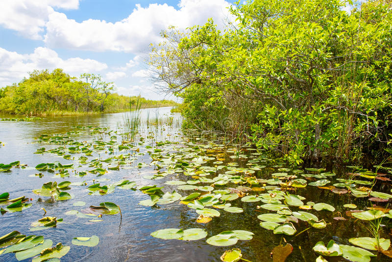 Υγρότοπος της Φλώριδας, γύρος Airboat στο εθνικό πάρκο Everglades στις ΗΠΑ στοκ εικόνες με δικαίωμα ελεύθερης χρήσης