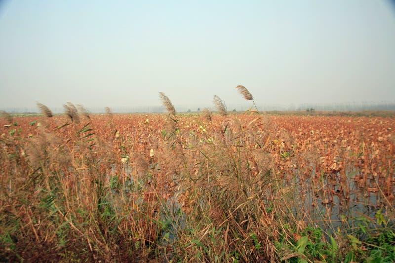 Υγρότοπος Lingbao στοκ εικόνες