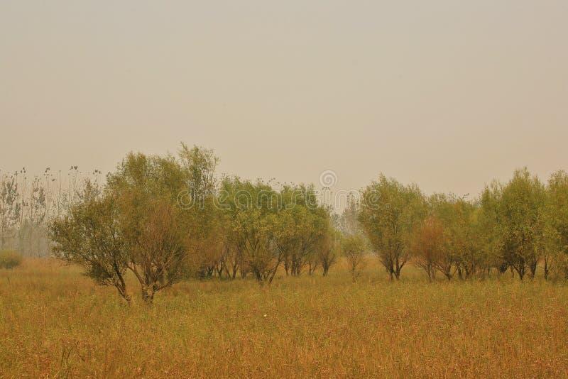 Υγρότοπος Lingbao στοκ εικόνα