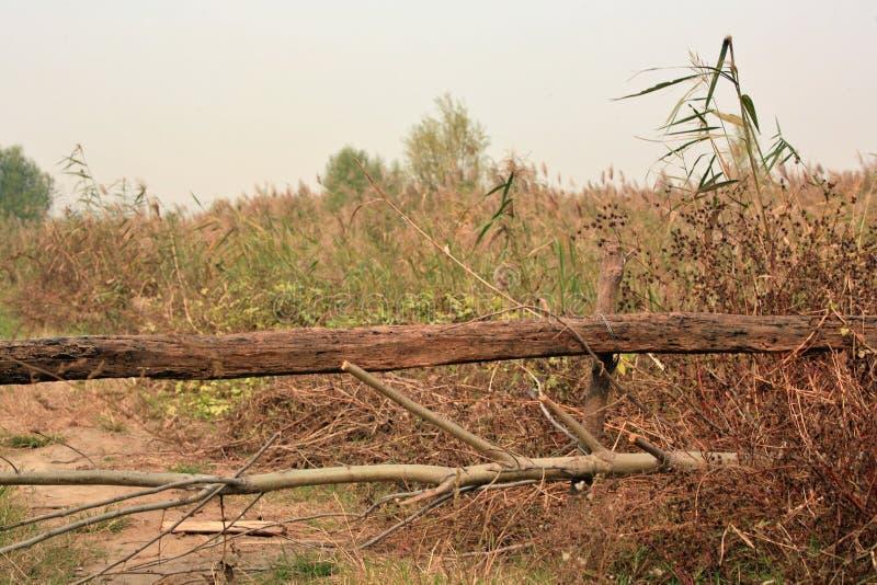 Υγρότοπος Lingbao στοκ εικόνες με δικαίωμα ελεύθερης χρήσης