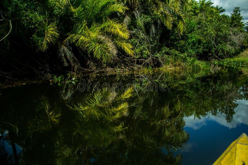 Υγρότοπος Marimbus, σε Chapada Diamantina στοκ φωτογραφία με δικαίωμα ελεύθερης χρήσης