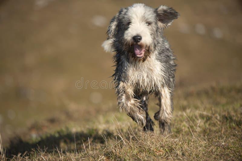 Υγρό γενειοφόρο τρέξιμο κόλλεϊ στοκ φωτογραφία με δικαίωμα ελεύθερης χρήσης