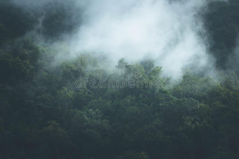 Υδρονέφωση στην κορυφή του ξύλου στοκ εικόνες με δικαίωμα ελεύθερης χρήσης