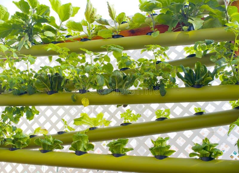 υδροπονική κατακόρυφος γήινων κήπων στοκ φωτογραφίες με δικαίωμα ελεύθερης χρήσης