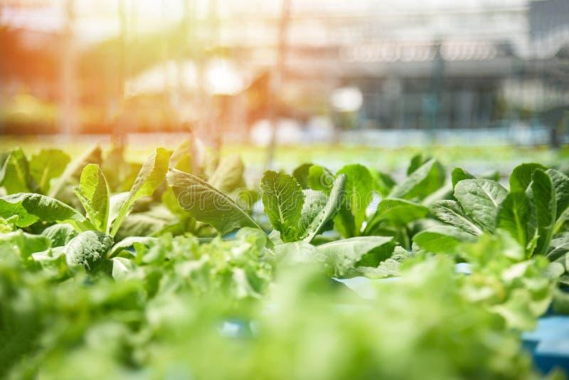 Υδροπονικός κήπος ανάπτυξης σαλάτας μαρουλιού μαρουλιών συστημάτων νέος φυτικός και φρέσκος πράσινος στοκ φωτογραφία με δικαίωμα ελεύθερης χρήσης