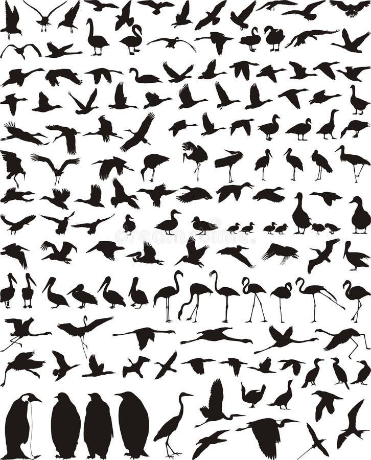 υδρόβια πουλιά πουλιών απεικόνιση αποθεμάτων