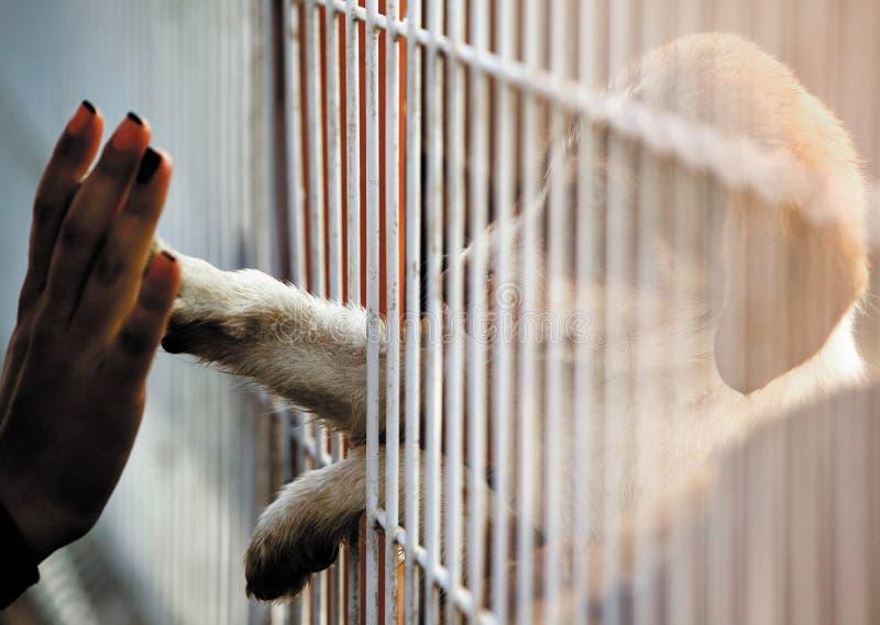 Υιοθέτηση σύνδεσης ανθρώπων σκυλιών στοκ εικόνες